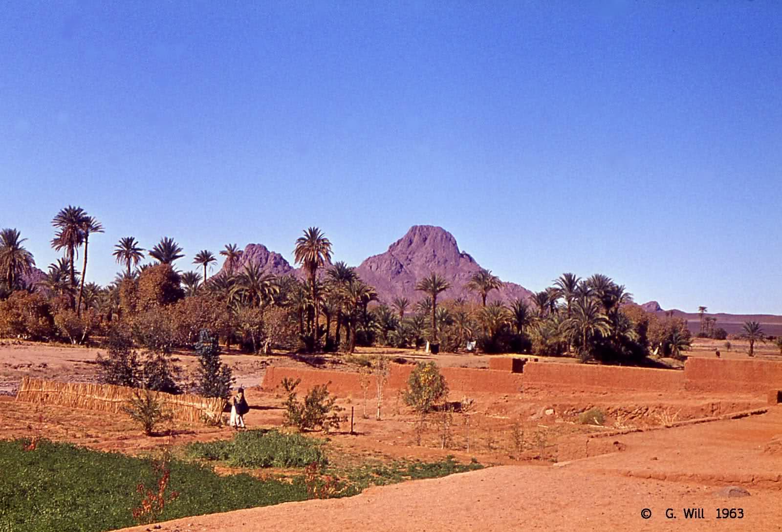 ملتقى دولي التجارة الإلكترونية في الجزائر: واقع وآفاق
